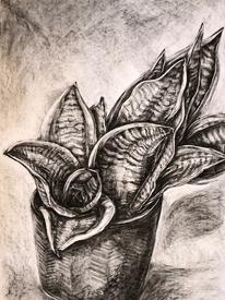 Plant Series 02, Snake Plant