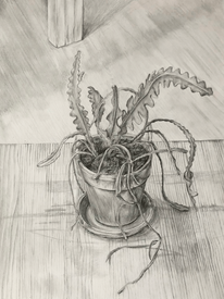 Plant Series 03, Fishbone Cactus