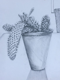 Cactus on the Terrace