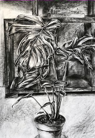 Drawing of a Cheese Plant