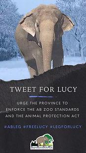 Tweet for Lucy.jpg