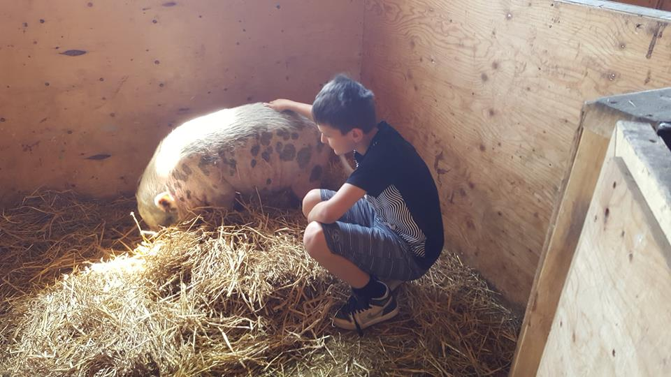 Peter and a pig