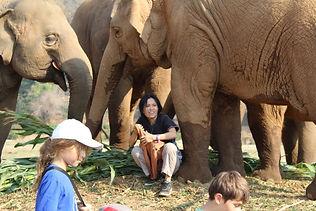 Elephant Nature Park Lek Chailert LEAP
