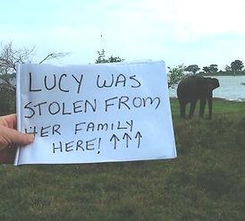 Lucy the elephant Sri Lanka Asian elephants LEAP