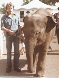 Lucy the Elephant Lucy's Edmonton Advocates Project