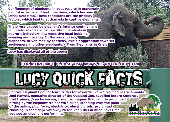 Lucy the Elephant Quick Facts
