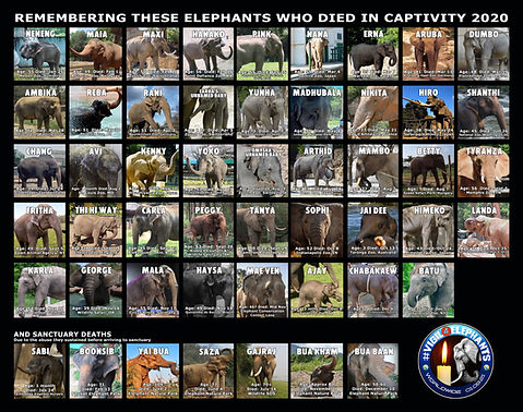 51 Elephant Meme.jpg