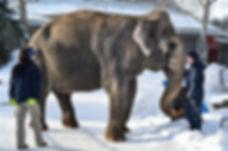 edmonton-valley-zoo-lucy-unknown-lucys-e