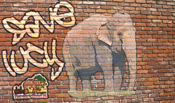 Lucy grafitti