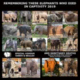 19 Elephant Meme.jpg