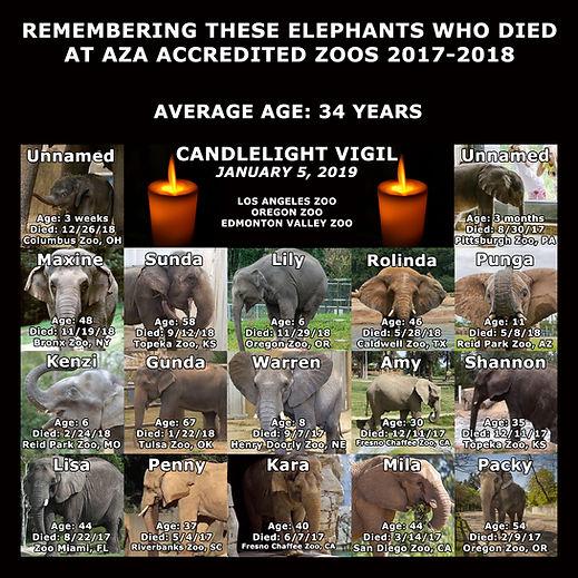 17 Elephant Meme.jpg