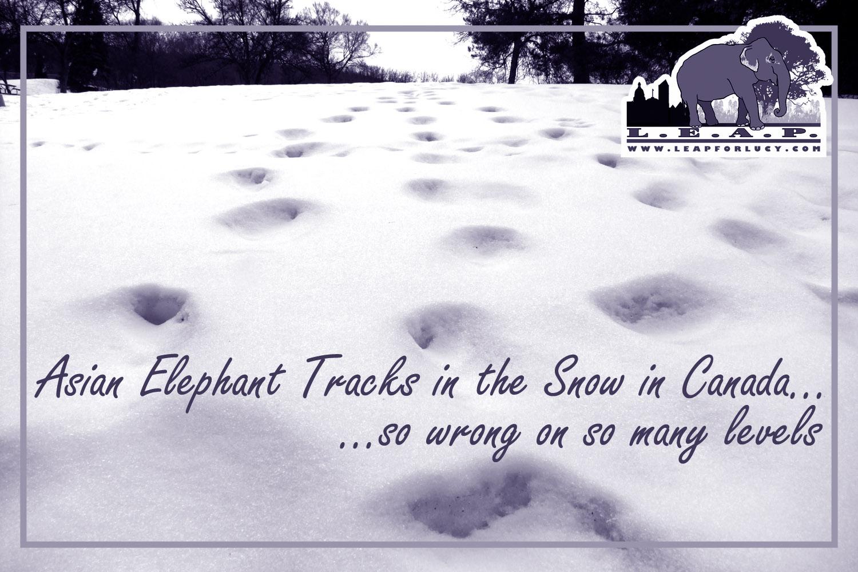Elephant Tracks in the snow