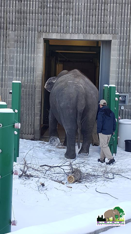 Lucy entering her barn