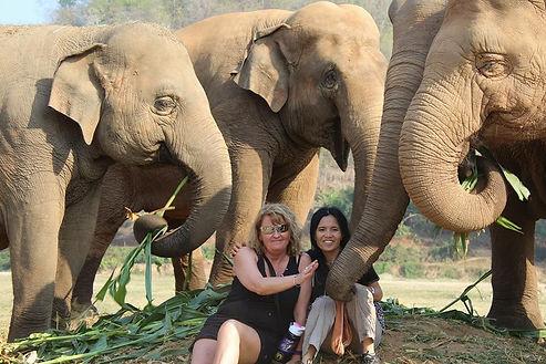 Elephant Nature Park LEAP