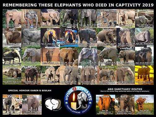 37 Elephant Meme.jpg