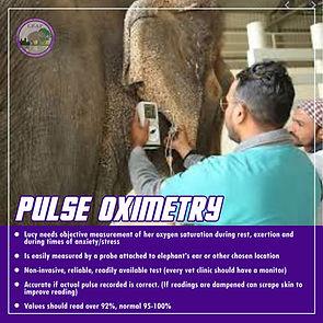 Pulse Oximetry 1.jpg