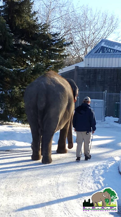 Lucy the Elephant Edmonton Valley Zoo LEAP
