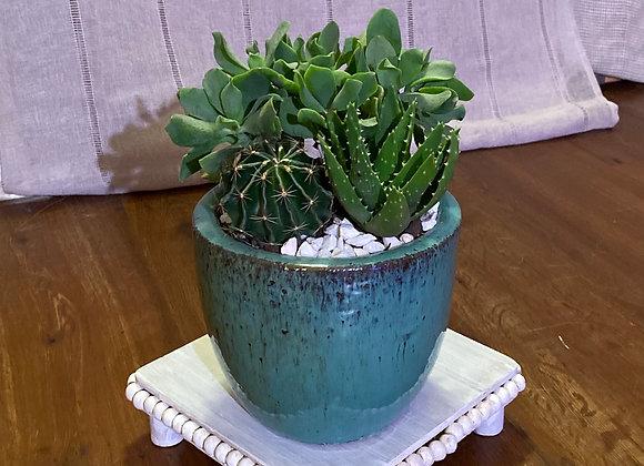 Crassula/Aloe/Cactus Arrangement