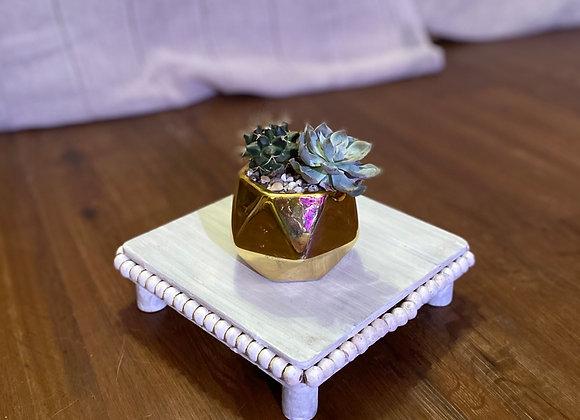 Echeveria/Cactus Duo