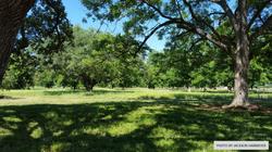 Rosalie Meadow