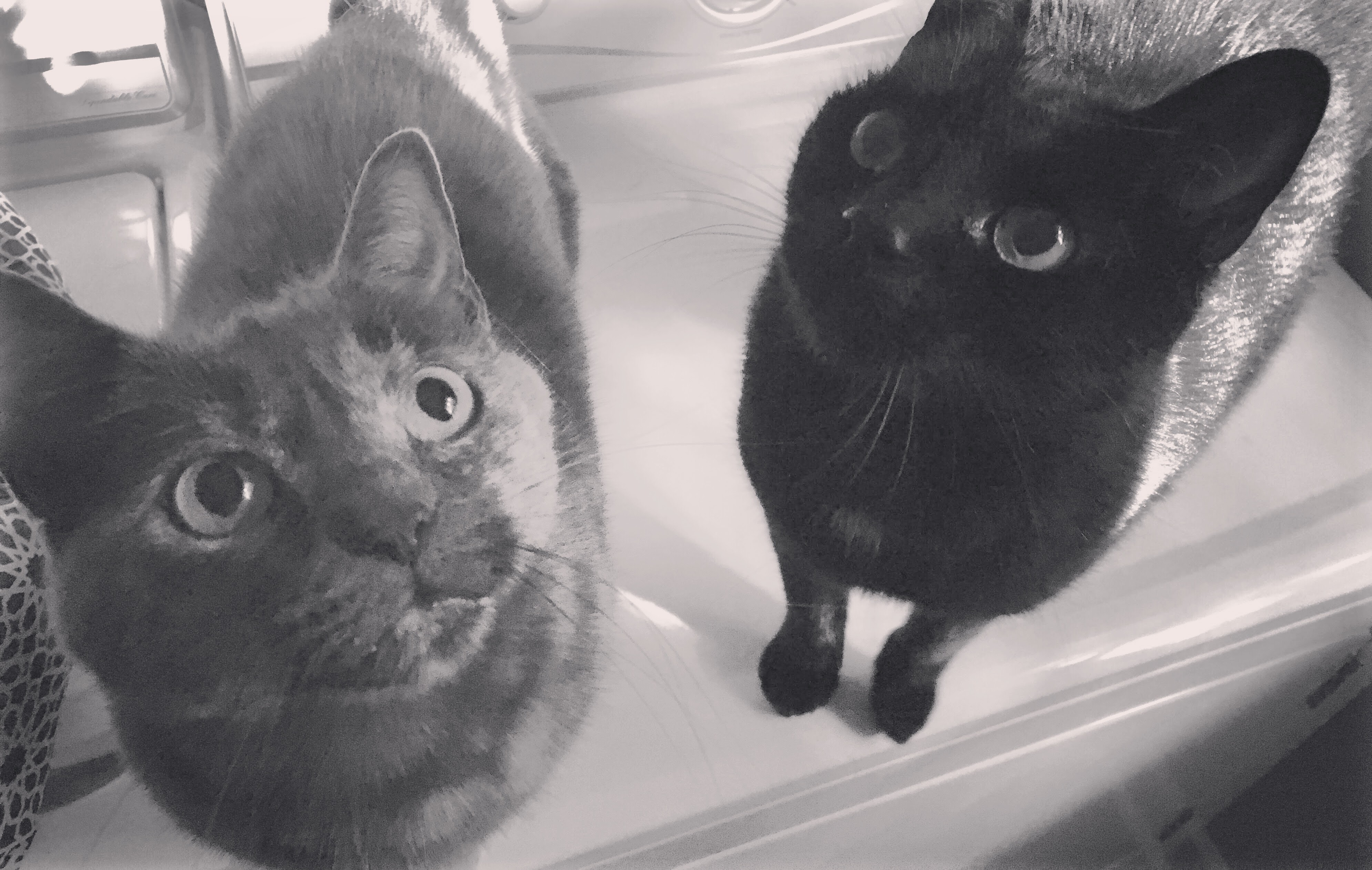 Lil' Bit & Gus