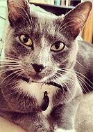 lola the cat of lola and company - pet care