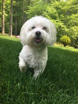 dog enjoying yard time with pet sitter