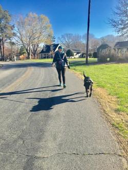 walking a dog client during pet sitting visit