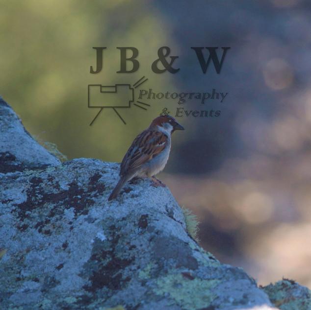Sparrow in shade