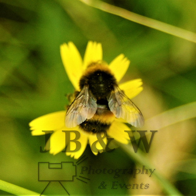 Bee at rest