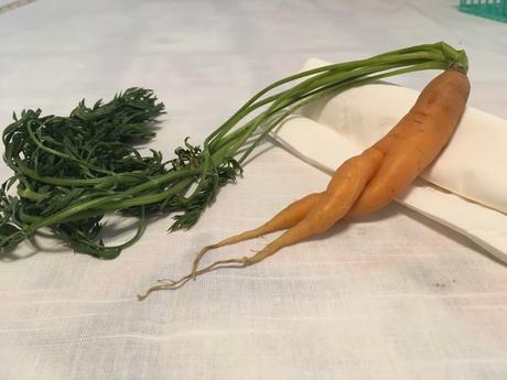 The Modest Carrot
