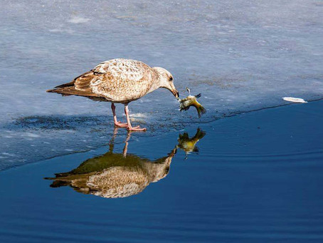 Why Don't Fish Freeze in the Winter?
