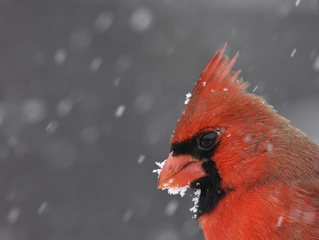 Birds to Watch for in the Winter