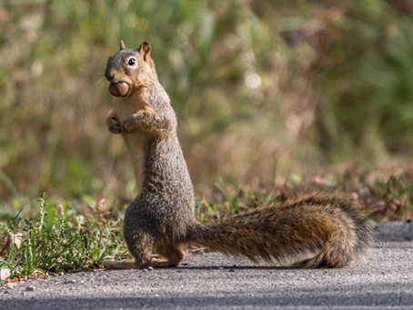 Nutty Facts About Squirrels