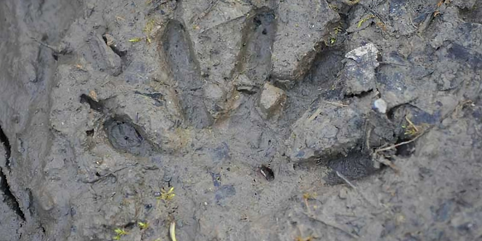 Tracking Animals in Winter