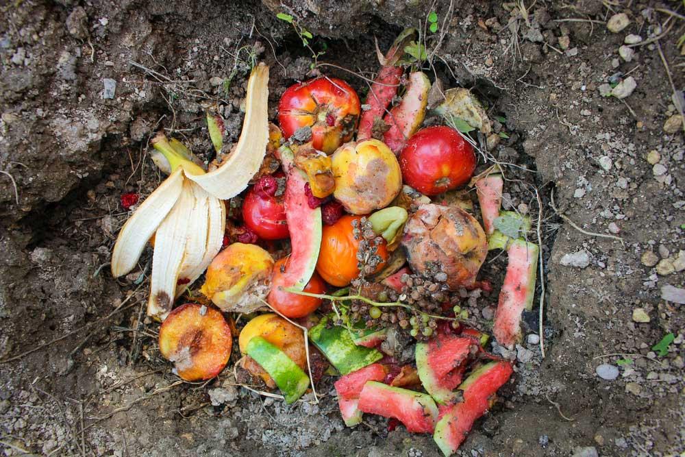 food waste compost