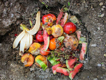 Create Some Compost in a Cup