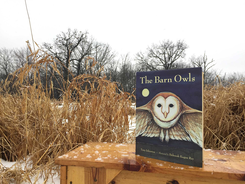 the barn owl book