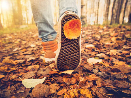 Awesome Autumn Activities