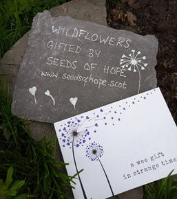 Display plaque at Ninewells Community Garden, Dundee
