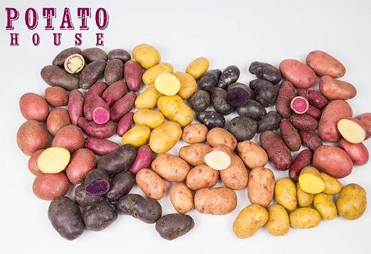 Potato%20House%20logo_edited.jpg