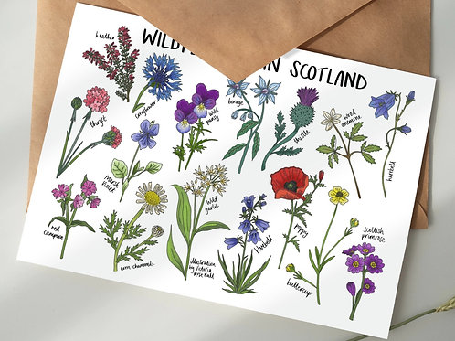 'Wildflowers in Scotland' - 5-pack wildflower seed gift set