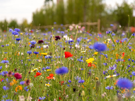 How to sow your wildflower seed mix