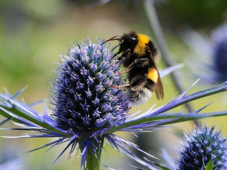 Your gardening calendar: Top tasks for March!