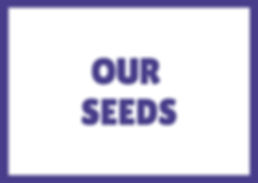 Our seeds page button.jpg