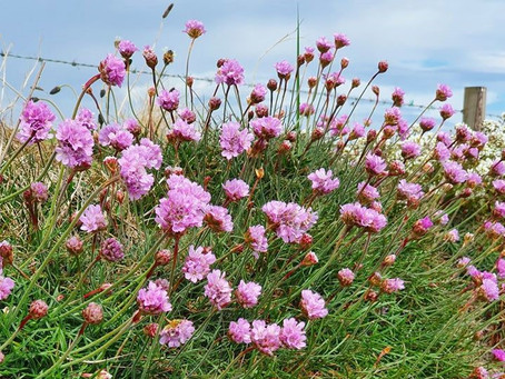 Wild wanders with Fiona Hall: Pillows of pink