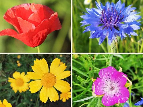 Cornfield annuals mix - wildflower seed gift set