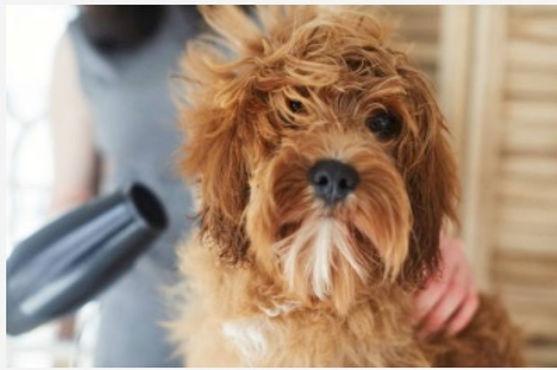 dog-wash-puddle33.jpg