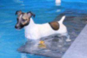 pool-puddle4_edited_edited.jpg