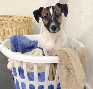 dog-wash-_basket1-768x1024_edited_edited